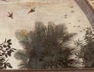棕櫚(シュロ)の木