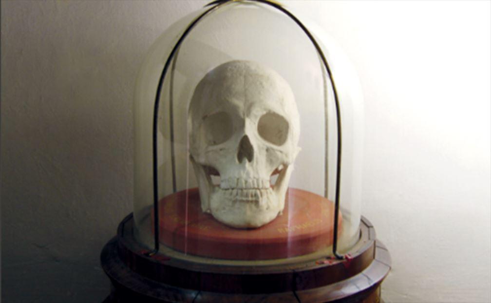 ラファエロの頭蓋骨(複製)